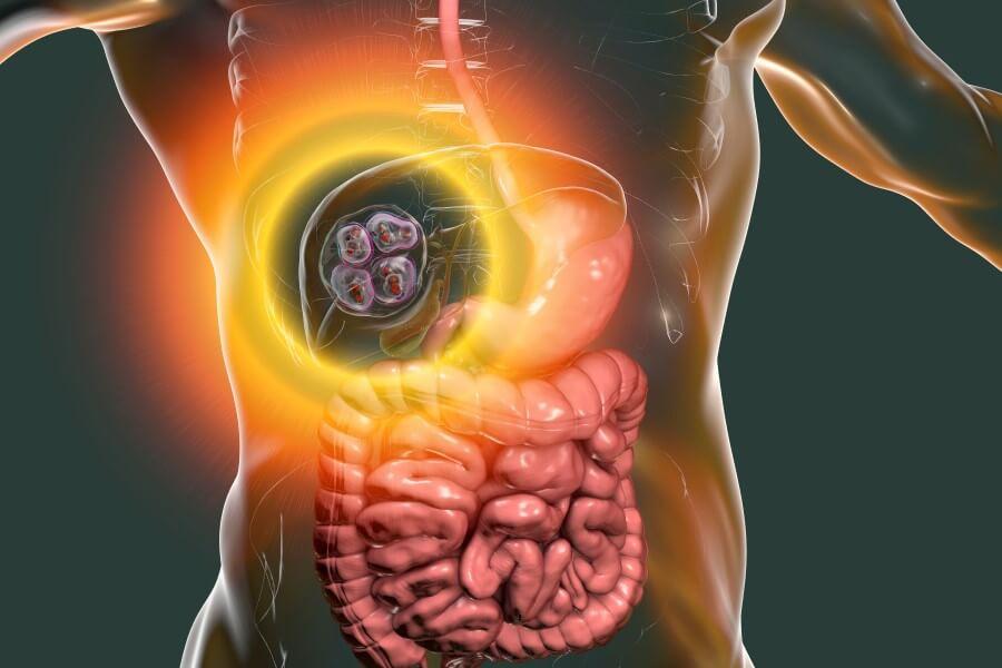 Grafika 3D obrazująca umiejscowienie torbieli z larwami tasiemca bąblowcowego w wątrobie człowieka.