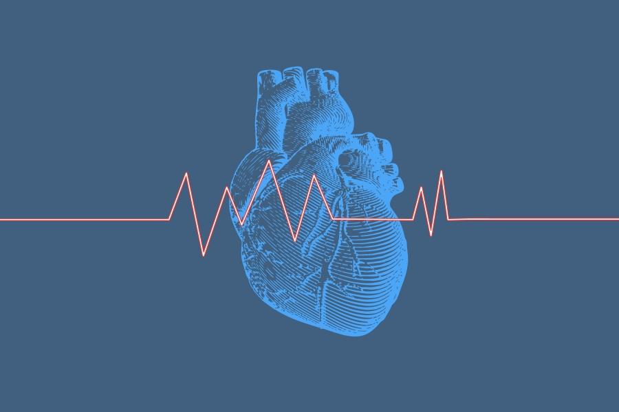 Grafika przedstawia anatomiczny rysunek serca oraz czerwoną linię ilustrującą puls