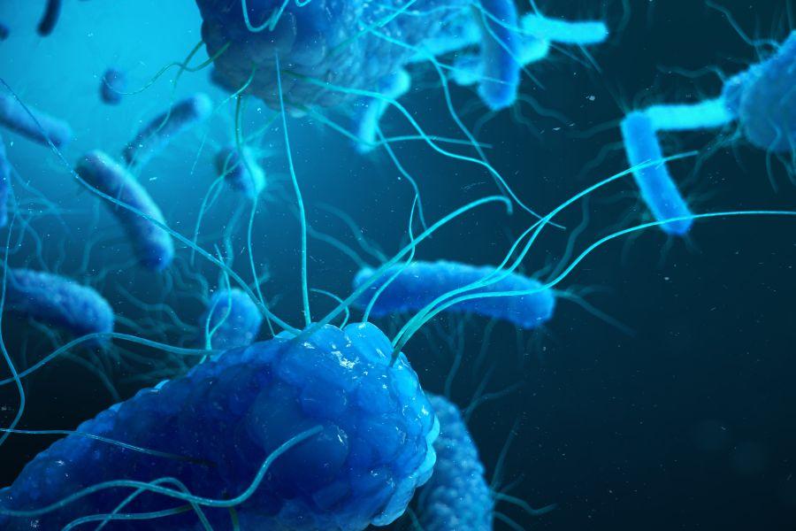 Jak można zarazić się salmonellą?