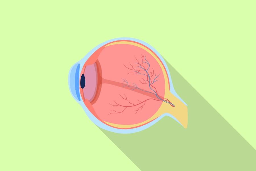 Grafika 2D obrazująca wewnętrzne struktury ludzkiego oka.