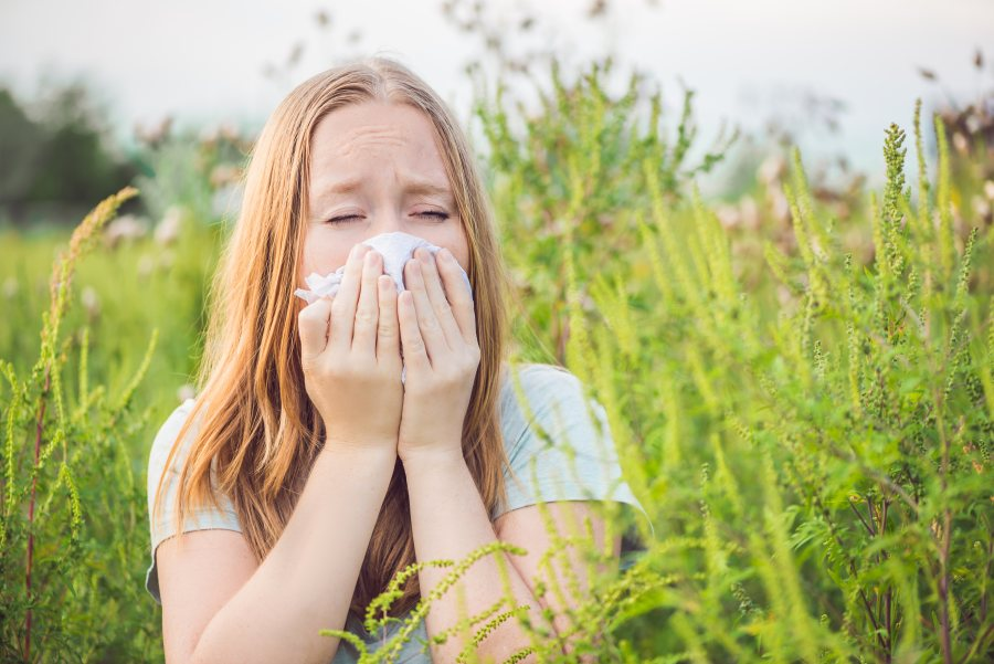 Kalendarz alergika: co pyli w lipcu?