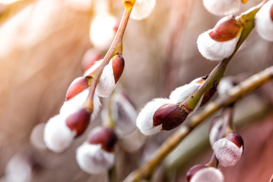 Kalendarz alergika: co pyli w marcu?