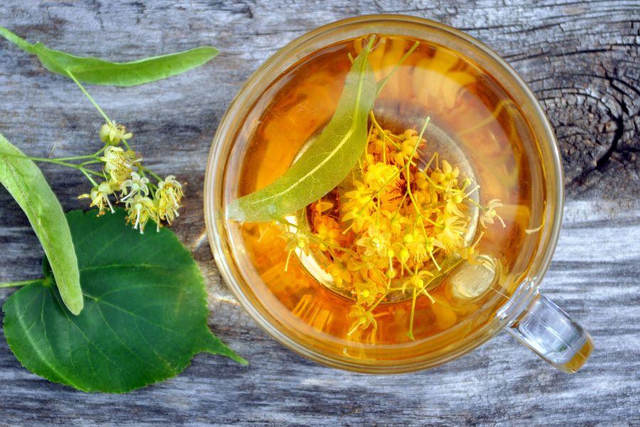 Lipa – właściwości lecznicze kwiatu lipy