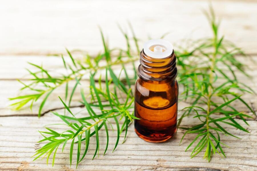 Buteleczka olejku z drzewa herbacianego na drewnianym blacie, obok listki drzewa herbacianego.