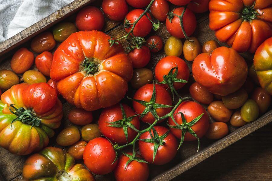 Pomidory - właściwości i zastosowanie w kuchni