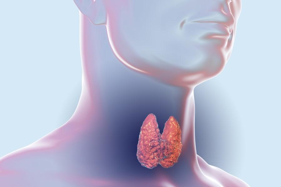 Grafika 3D przedstawiająca tarczycę w ludzkim ciele.