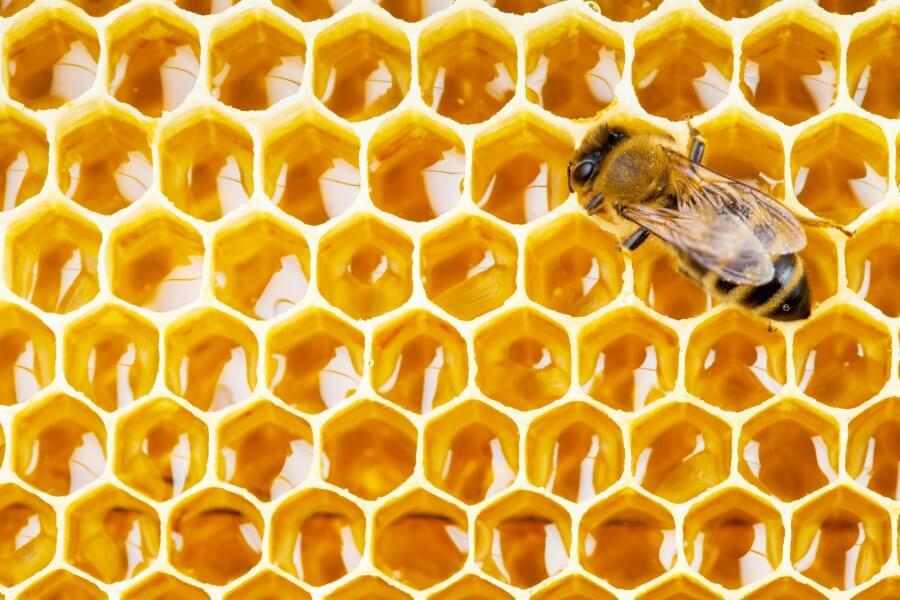 Propolis (kit pszczeli) - właściwości