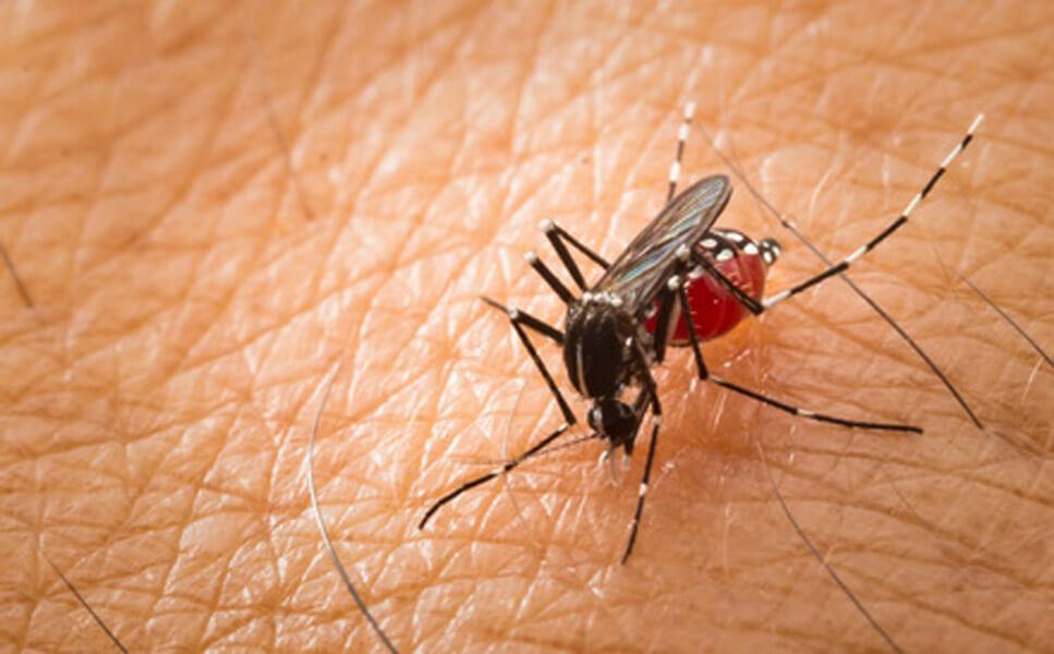 repelenty na komary